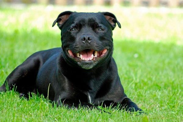 Necesito contratar un seguro si tengo un perro potencialmente peligroso